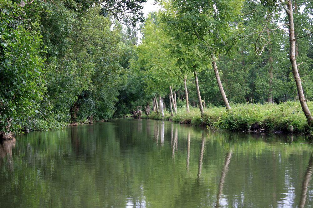 Rangée de frênes têtards le long d'un canal dans le Marais Poitevin